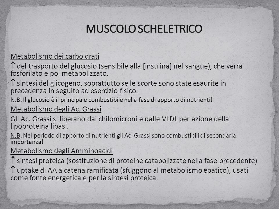 MUSCOLO SCHELETRICO Metabolismo dei carboidrati