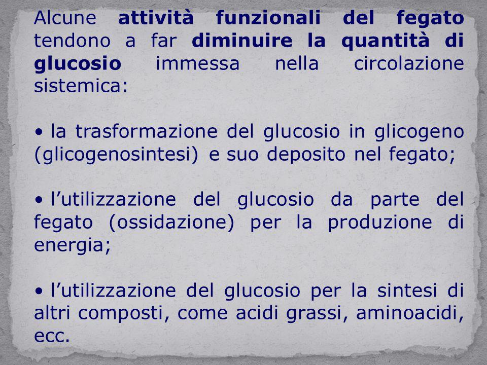Alcune attività funzionali del fegato tendono a far diminuire la quantità di glucosio immessa nella circolazione sistemica: