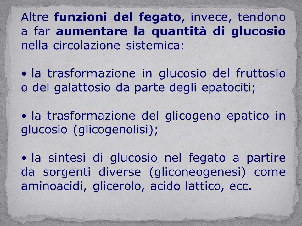Altre funzioni del fegato, invece, tendono a far aumentare la quantità di glucosio nella circolazione sistemica: