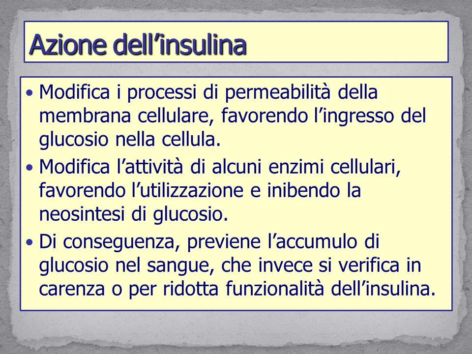 Azione dell'insulina Modifica i processi di permeabilità della membrana cellulare, favorendo l'ingresso del glucosio nella cellula.