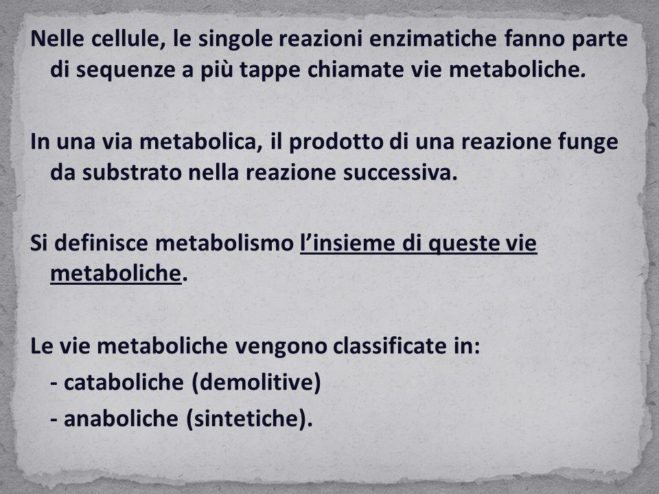 Nelle cellule, le singole reazioni enzimatiche fanno parte di sequenze a più tappe chiamate vie metaboliche.