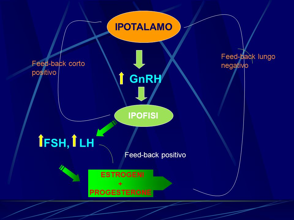 GnRH FSH, LH IPOTALAMO IPOFISI Feed-back lungo negativo