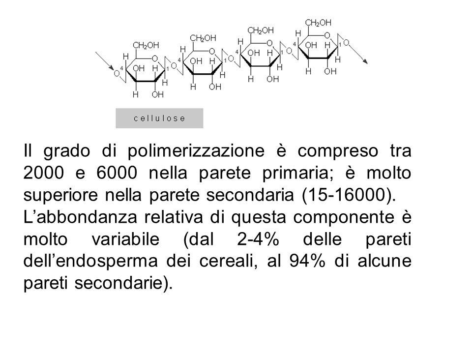 Il grado di polimerizzazione è compreso tra 2000 e 6000 nella parete primaria; è molto superiore nella parete secondaria (15-16000).