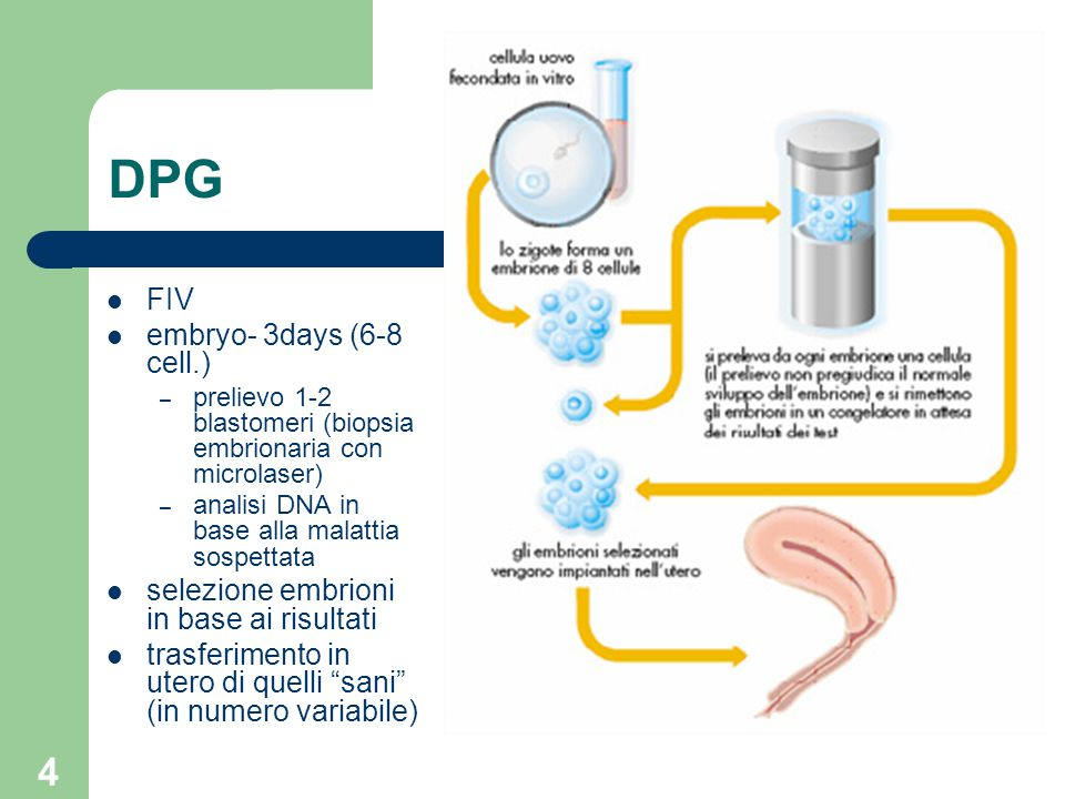 DPG FIV embryo- 3days (6-8 cell.)