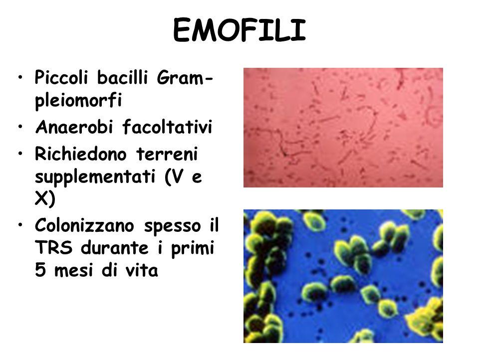 EMOFILI Piccoli bacilli Gram-pleiomorfi Anaerobi facoltativi