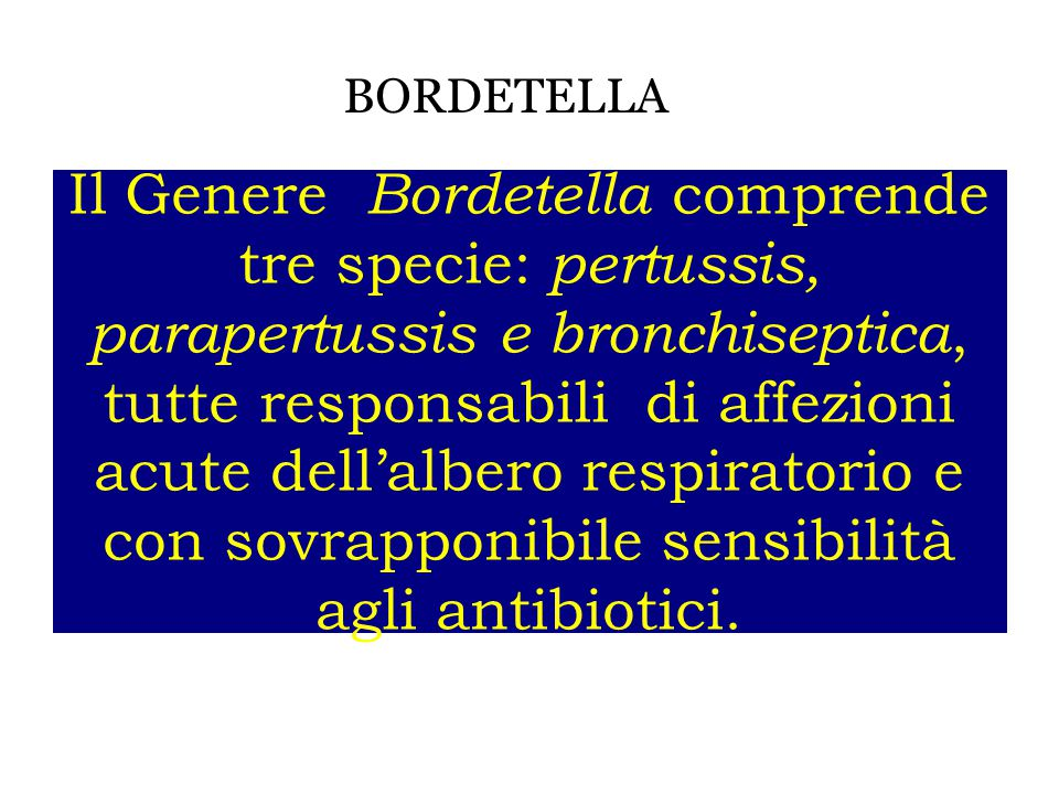 BORDETELLA