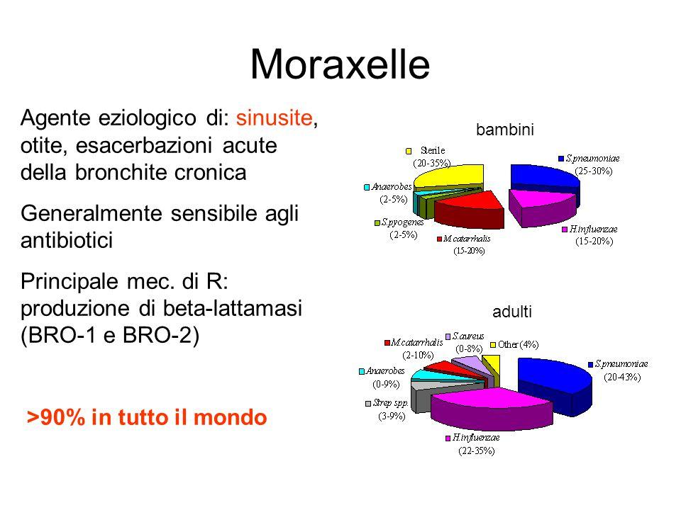 Moraxelle Agente eziologico di: sinusite, otite, esacerbazioni acute della bronchite cronica. Generalmente sensibile agli antibiotici.