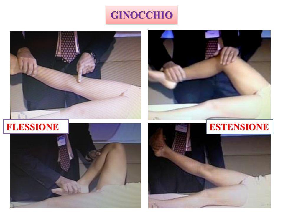 GINOCCHIO FLESSIONE ESTENSIONE ART + COLPITA E + FACILE DA ESAMINARE