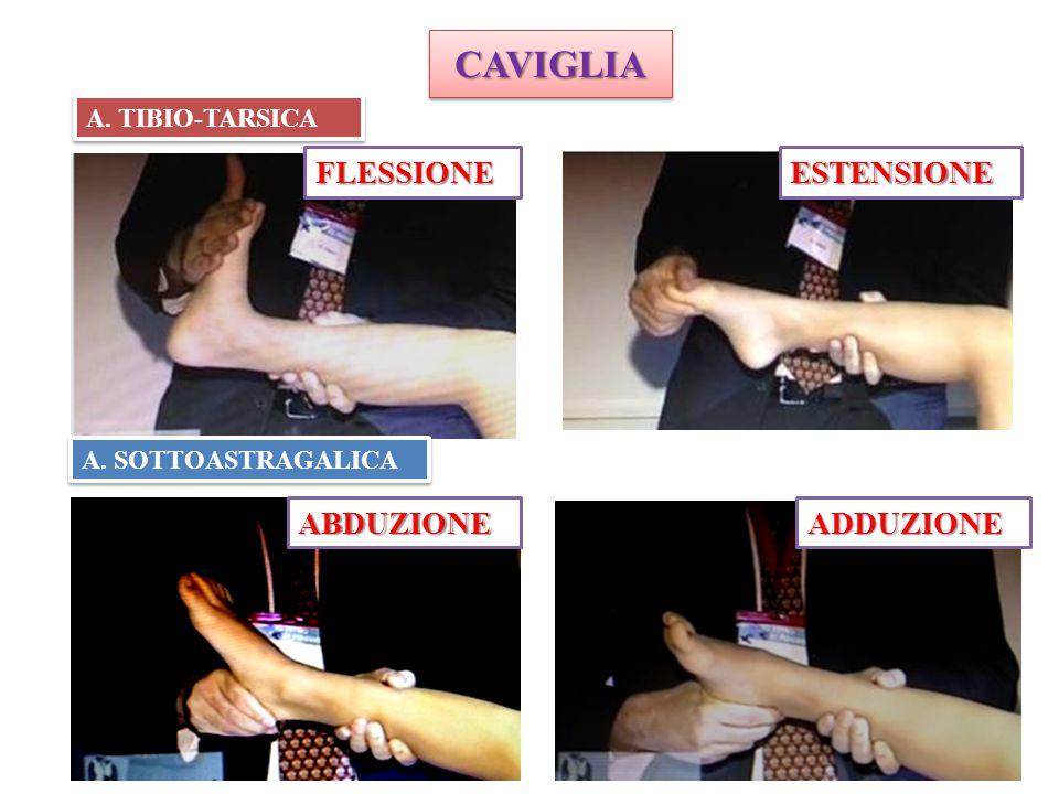 CAVIGLIA FLESSIONE ESTENSIONE ABDUZIONE ADDUZIONE A. TIBIO-TARSICA