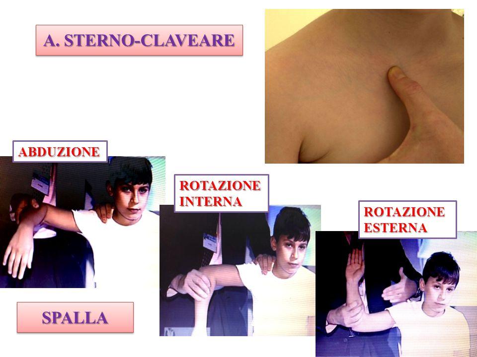 A. STERNO-CLAVEARE SPALLA