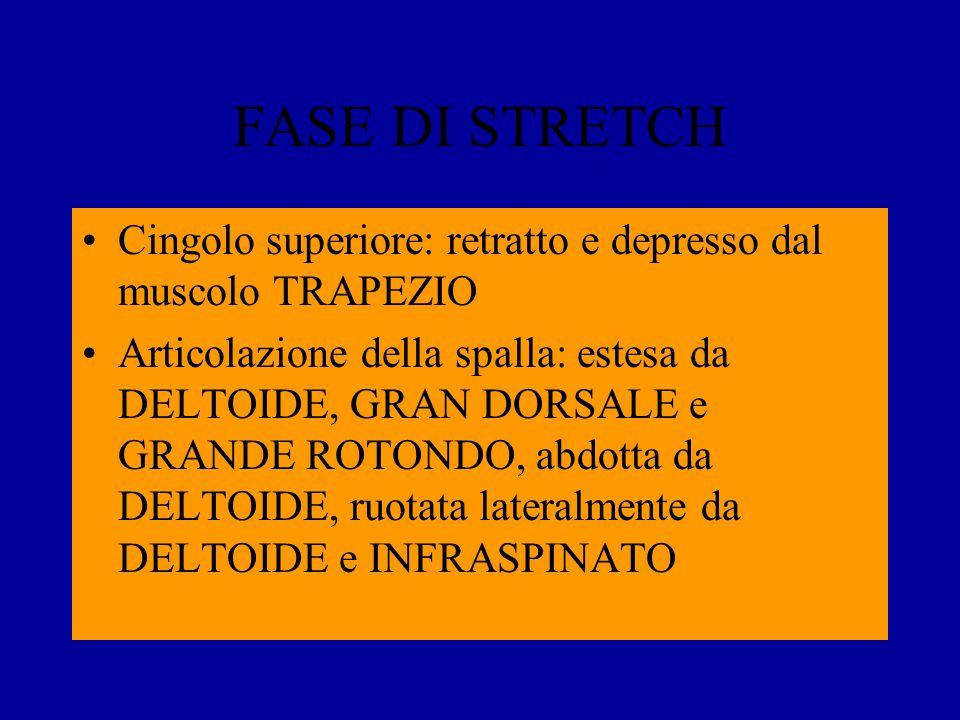 FASE DI STRETCH Cingolo superiore: retratto e depresso dal muscolo TRAPEZIO.