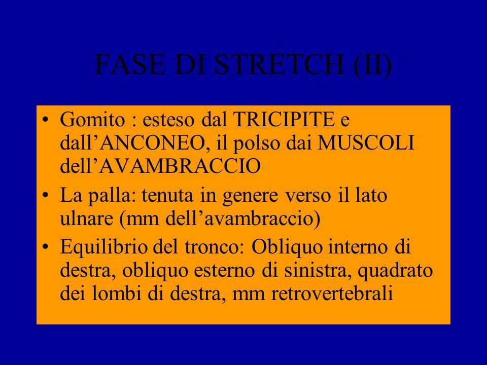 FASE DI STRETCH (II) Gomito : esteso dal TRICIPITE e dall'ANCONEO, il polso dai MUSCOLI dell'AVAMBRACCIO.