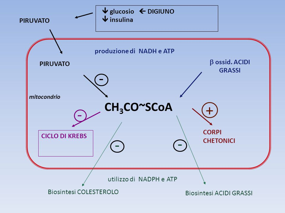 + - CH3CO~SCoA  glucosio  DIGIUNO  insulina