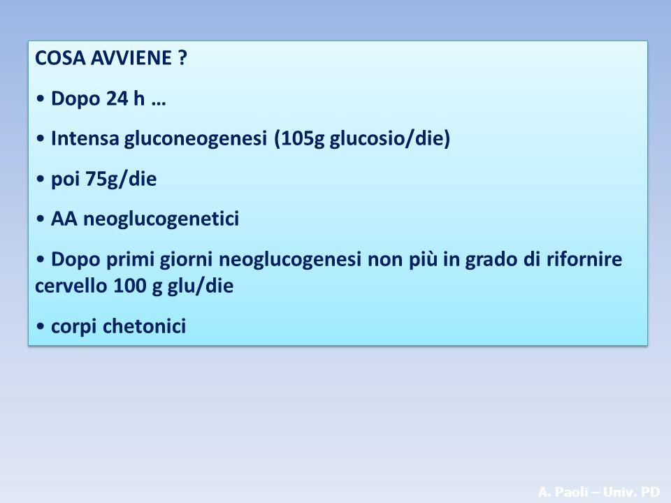Intensa gluconeogenesi (105g glucosio/die) poi 75g/die