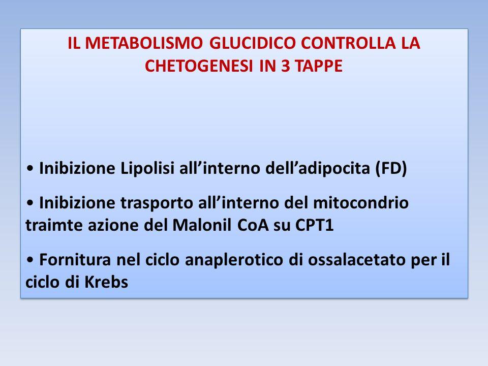 IL METABOLISMO GLUCIDICO CONTROLLA LA CHETOGENESI IN 3 TAPPE