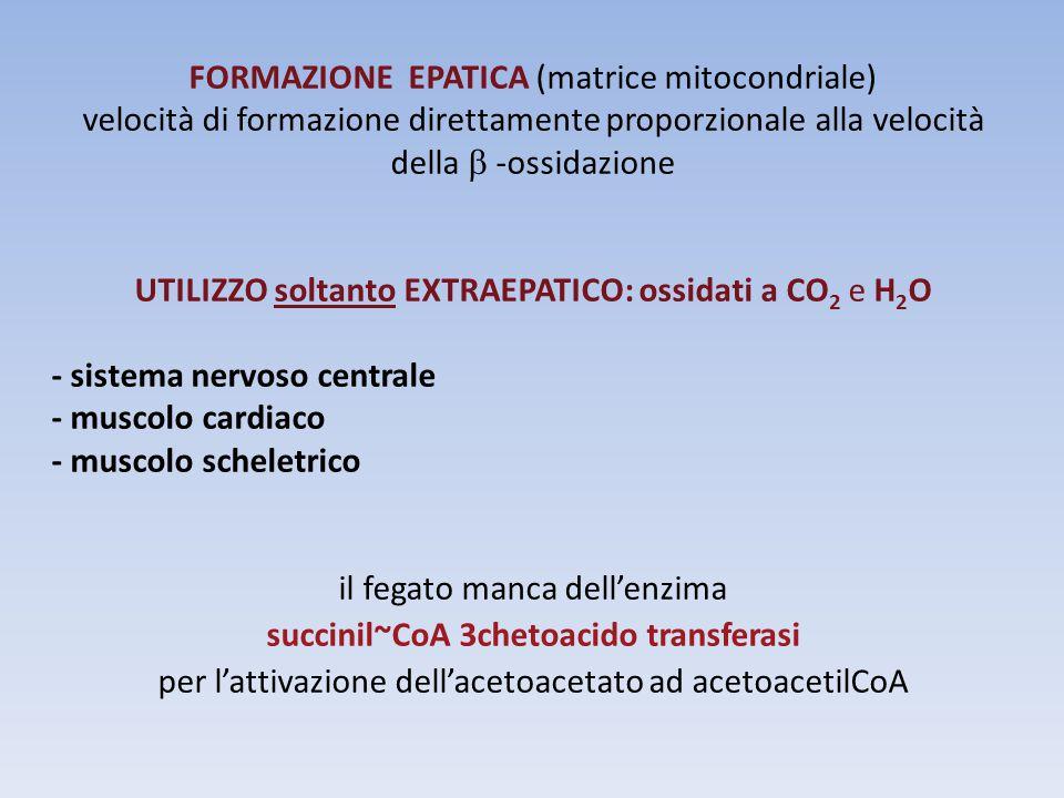 succinil~CoA 3chetoacido transferasi