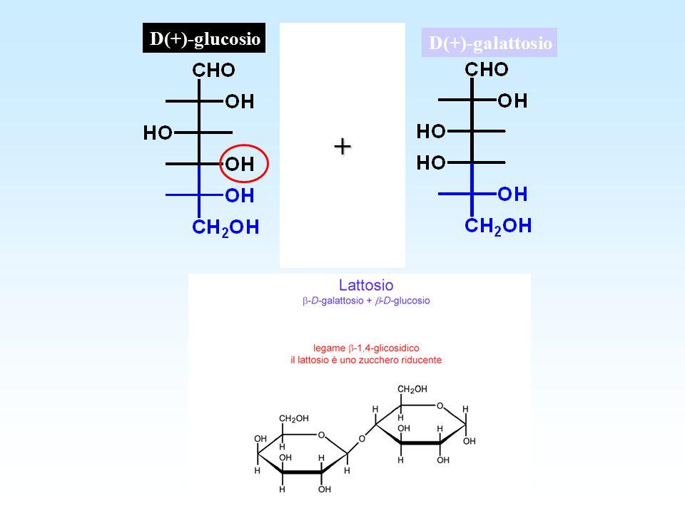 D(+)-glucosio D(+)-galattosio +