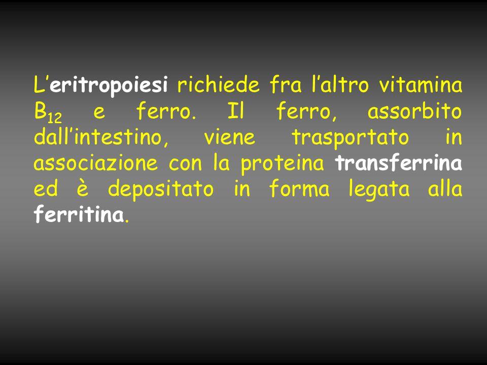 L'eritropoiesi richiede fra l'altro vitamina B12 e ferro