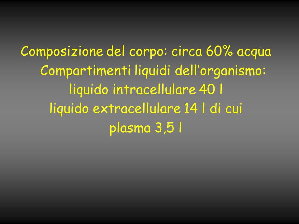 Composizione del corpo: circa 60% acqua