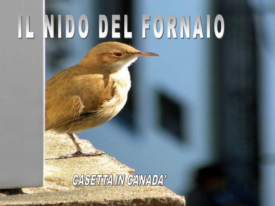 IL NIDO DEL FORNAIO CASETTA IN CANADA