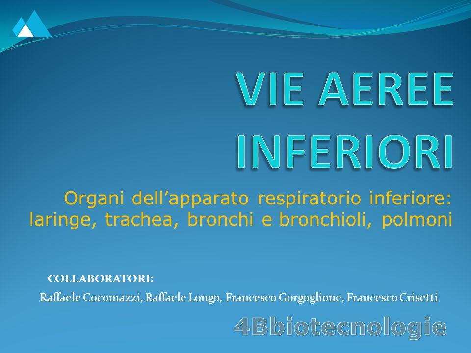 VIE AEREE INFERIORI 4Bbiotecnologie