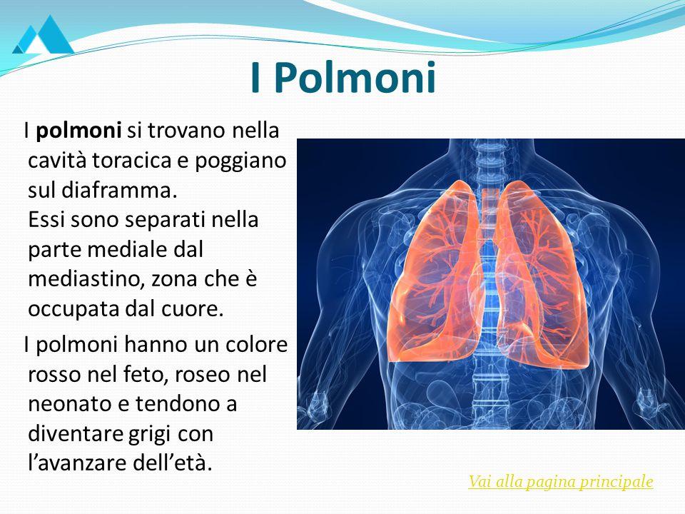 I Polmoni