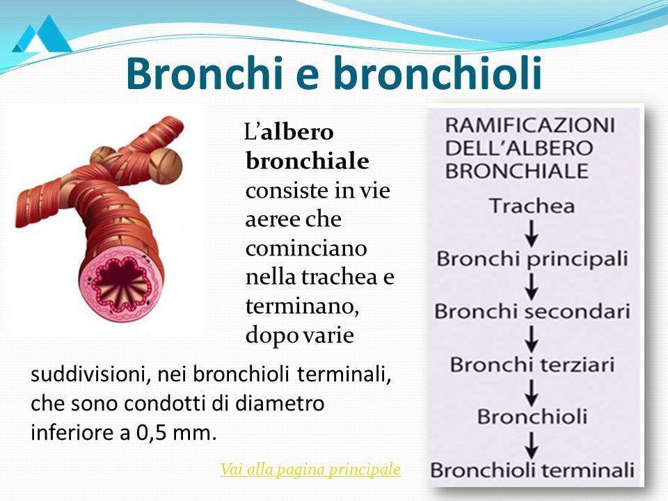 Bronchi e bronchioli L'albero bronchiale consiste in vie aeree che cominciano nella trachea e terminano, dopo varie.