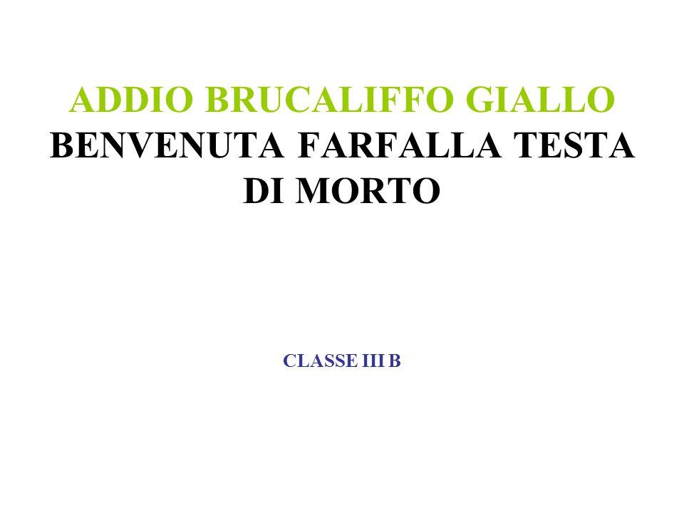 ADDIO BRUCALIFFO GIALLO BENVENUTA FARFALLA TESTA DI MORTO CLASSE III B