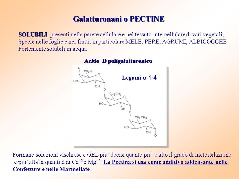 Galatturonani o PECTINE