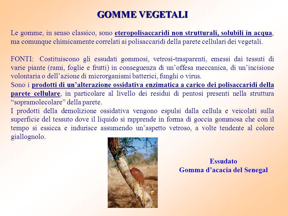 Gomma d'acacia del Senegal