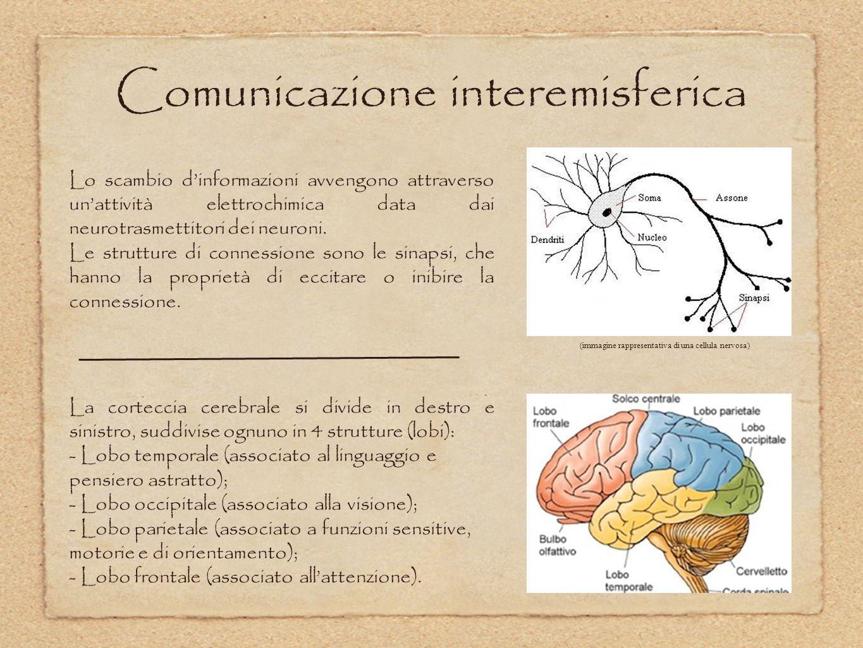 Comunicazione interemisferica