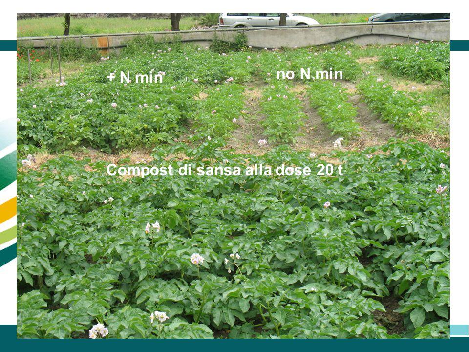 no N min + N min Compost di sansa alla dose 20 t