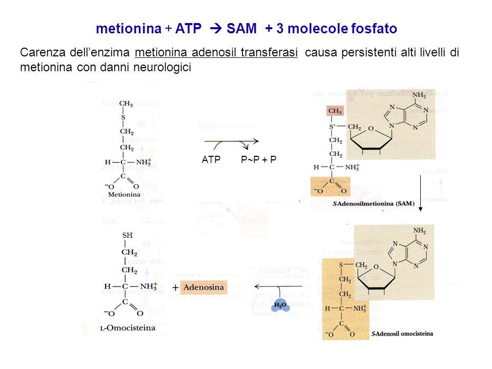 metionina + ATP  SAM + 3 molecole fosfato