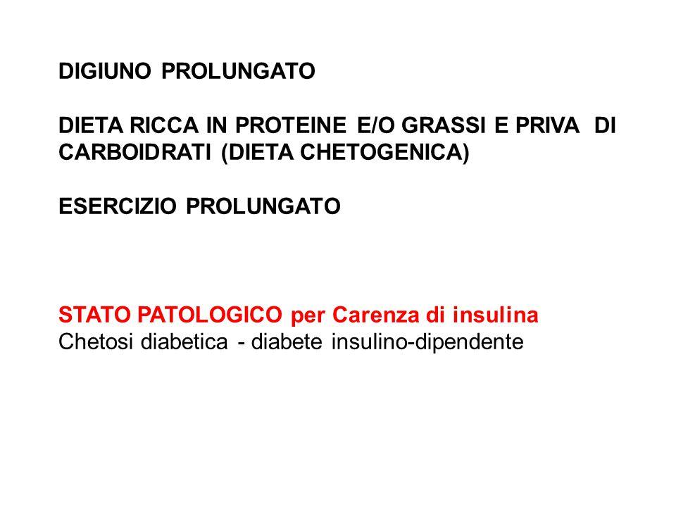 DIGIUNO PROLUNGATO DIETA RICCA IN PROTEINE E/O GRASSI E PRIVA DI CARBOIDRATI (DIETA CHETOGENICA) ESERCIZIO PROLUNGATO.