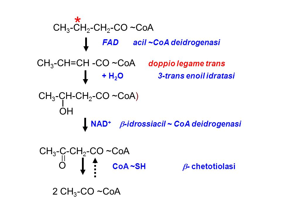 * CH3-CH2-CH2-CO ~CoA CH3-CH=CH -CO ~CoA doppio legame trans
