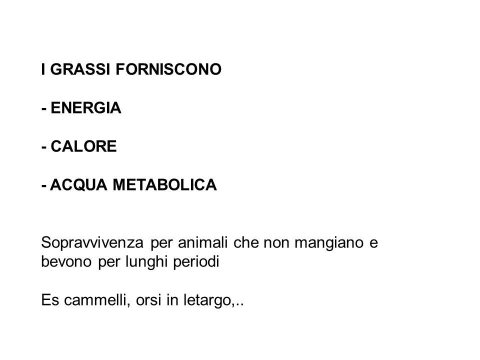 I GRASSI FORNISCONO - ENERGIA. - CALORE. - ACQUA METABOLICA. Sopravvivenza per animali che non mangiano e bevono per lunghi periodi.