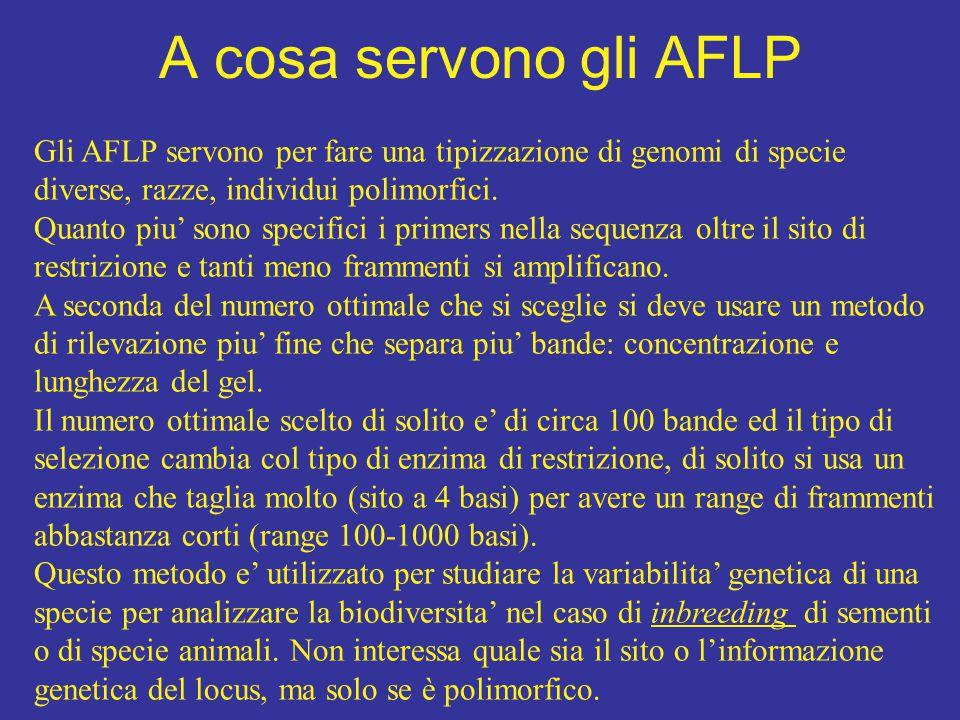 A cosa servono gli AFLP Gli AFLP servono per fare una tipizzazione di genomi di specie diverse, razze, individui polimorfici.