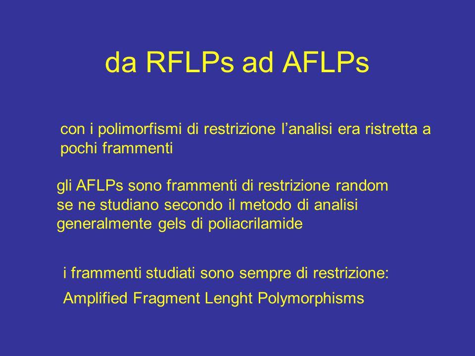 da RFLPs ad AFLPs con i polimorfismi di restrizione l'analisi era ristretta a pochi frammenti. gli AFLPs sono frammenti di restrizione random.