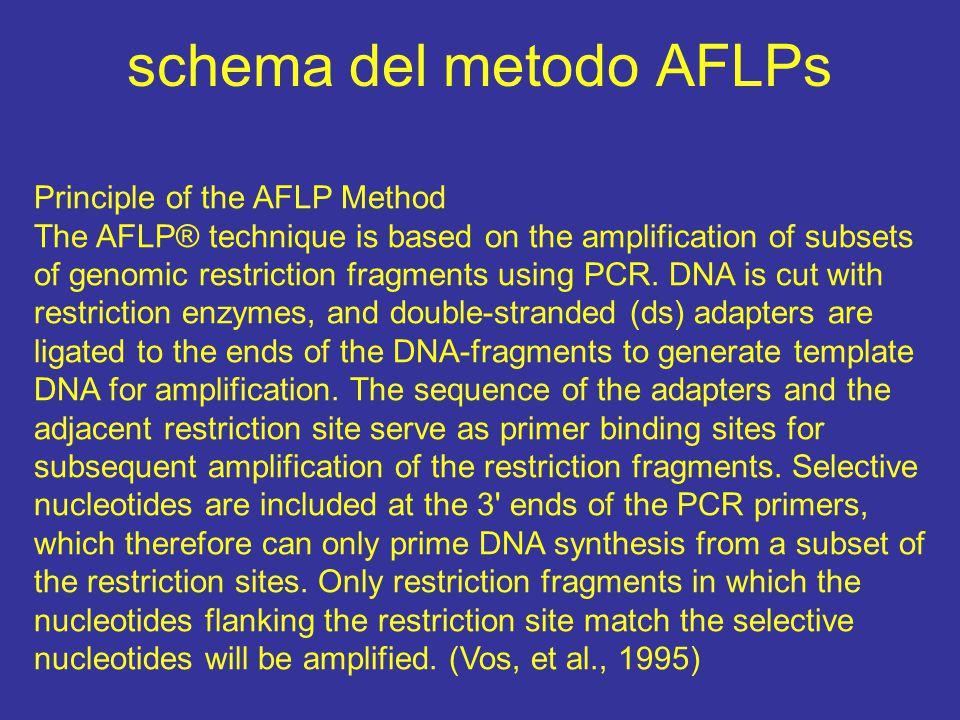 schema del metodo AFLPs