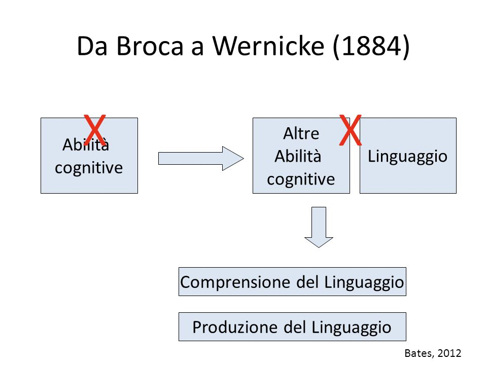 X X Da Broca a Wernicke (1884) Abilità cognitive Altre Abilità