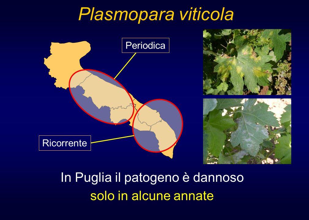In Puglia il patogeno è dannoso