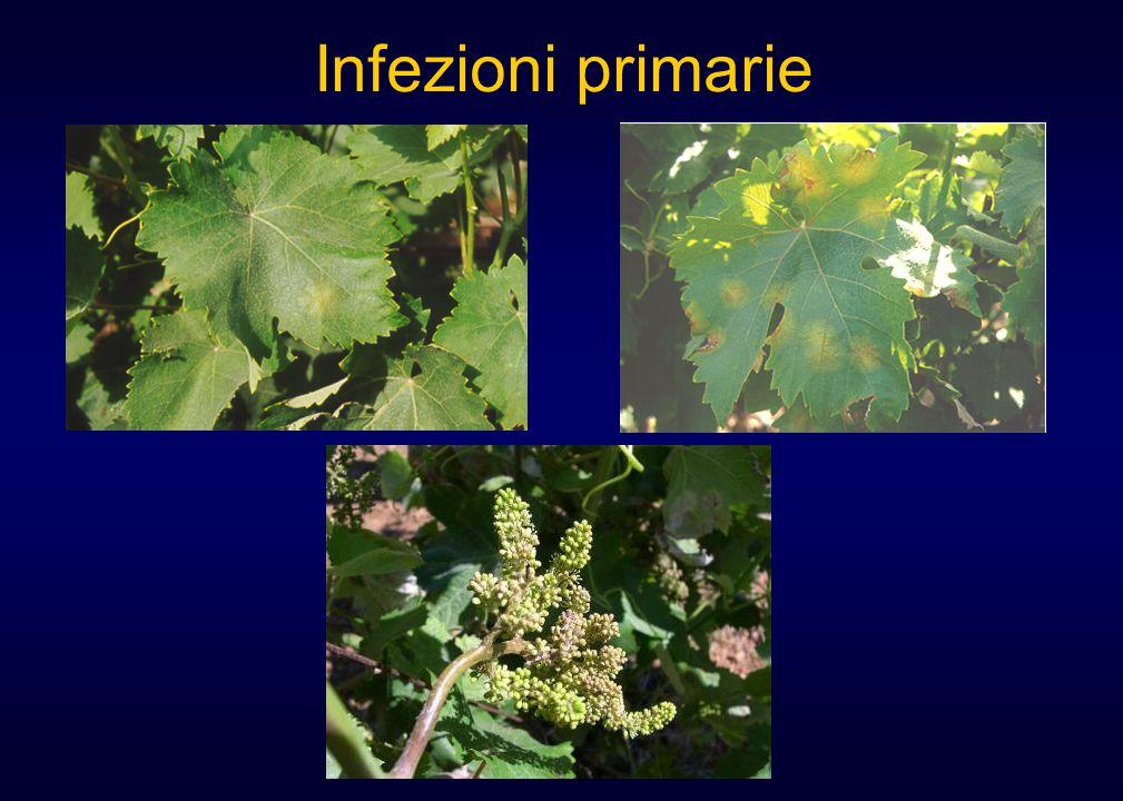 Infezioni primarie