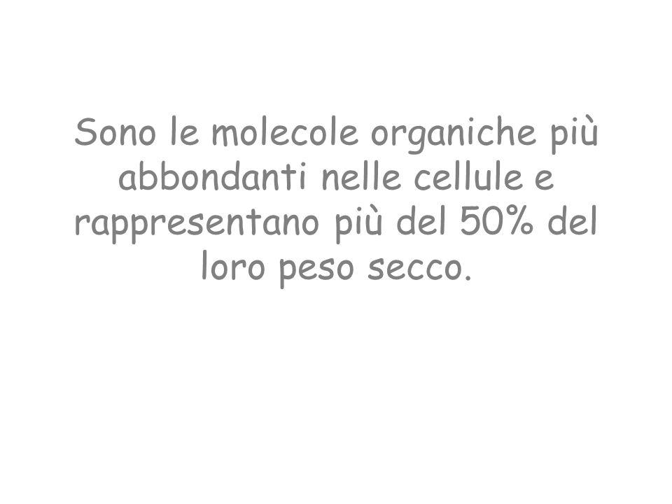 Sono le molecole organiche più abbondanti nelle cellule e rappresentano più del 50% del loro peso secco.
