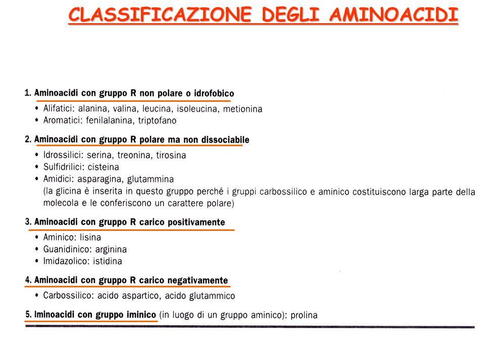 CLASSIFICAZIONE DEGLI AMINOACIDI