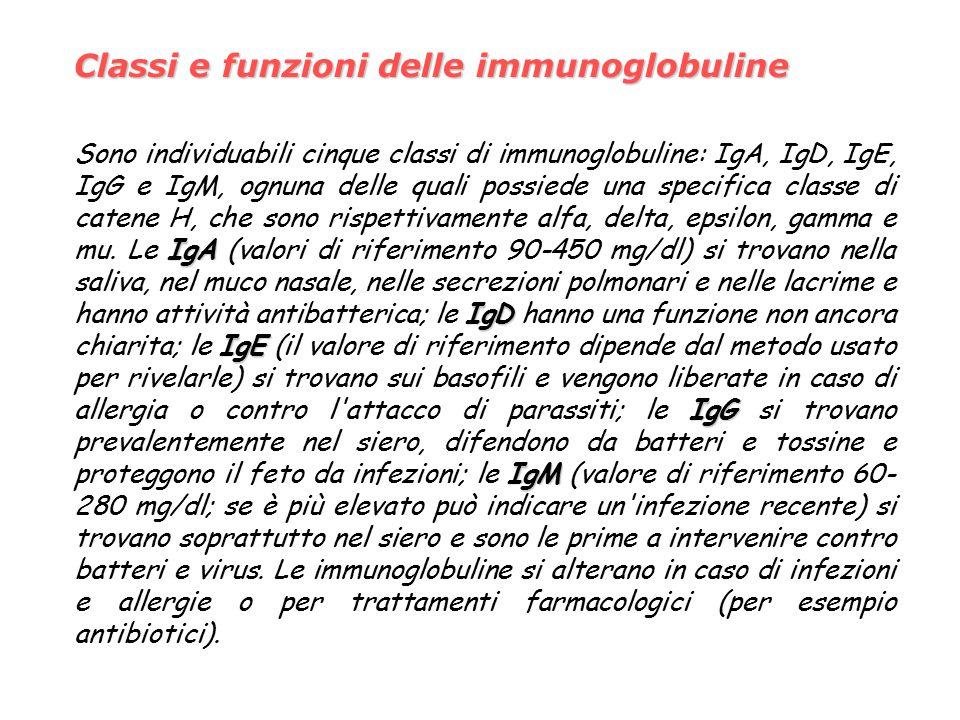 Classi e funzioni delle immunoglobuline