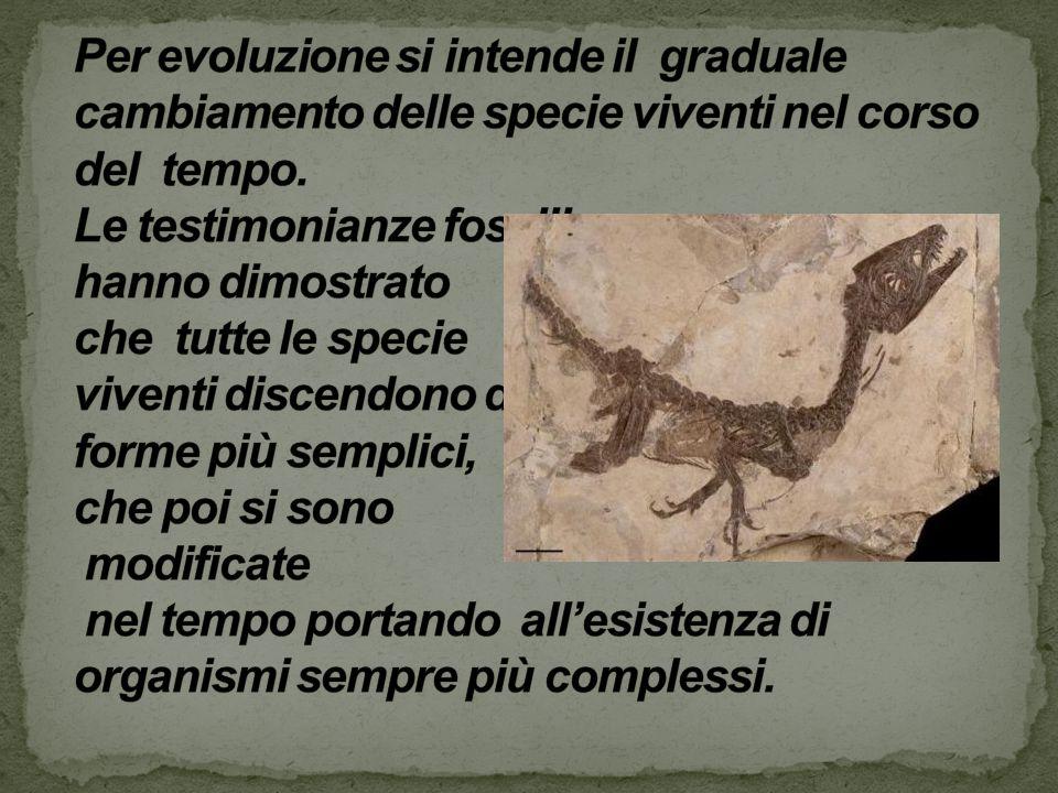Per evoluzione si intende il graduale cambiamento delle specie viventi nel corso del tempo.