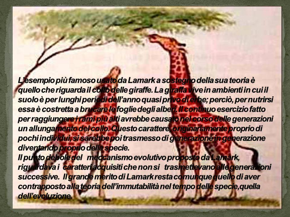 L'esempio più famoso usato da Lamark a sostegno della sua teoria è quello che riguarda il collo delle giraffe.