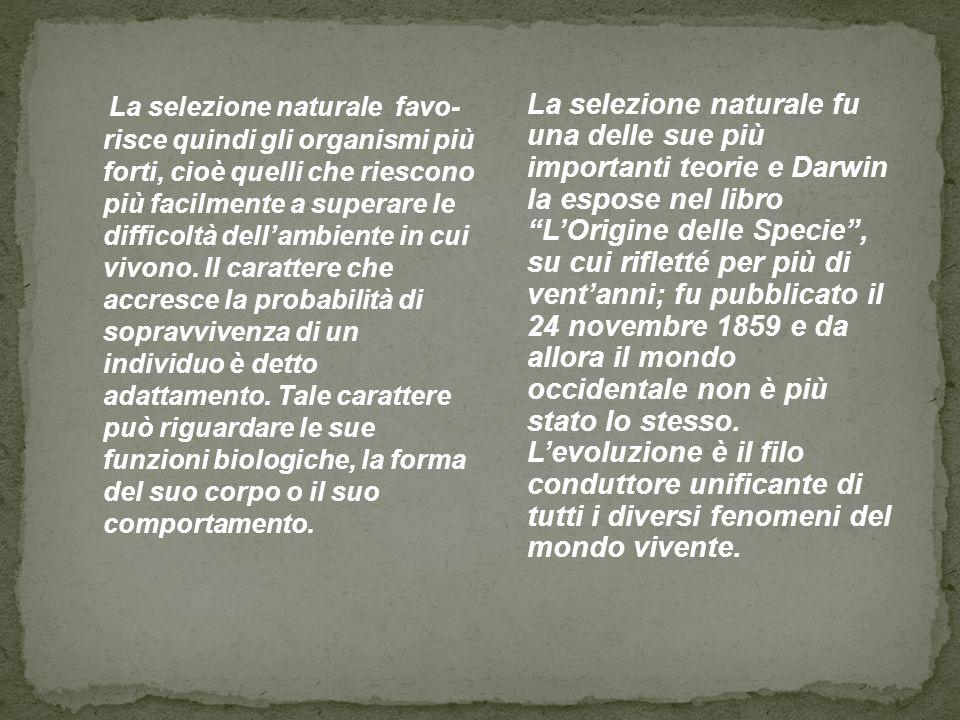 La selezione naturale fu una delle sue più importanti teorie e Darwin la espose nel libro L'Origine delle Specie , su cui rifletté per più di vent'anni; fu pubblicato il 24 novembre 1859 e da allora il mondo occidentale non è più stato lo stesso. L'evoluzione è il filo conduttore unificante di tutti i diversi fenomeni del mondo vivente.
