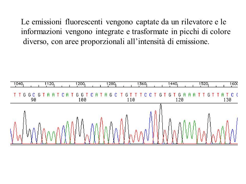 Le emissioni fluorescenti vengono captate da un rilevatore e le