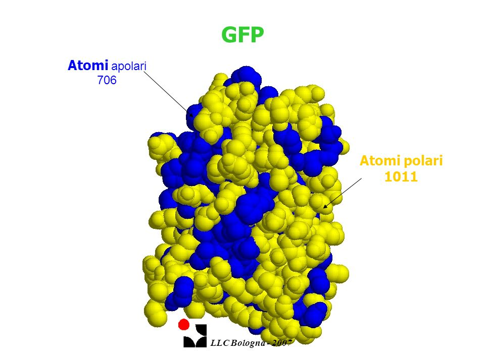 GFP Atomi apolari 706 Atomi polari 1011 LLC Bologna - 2007